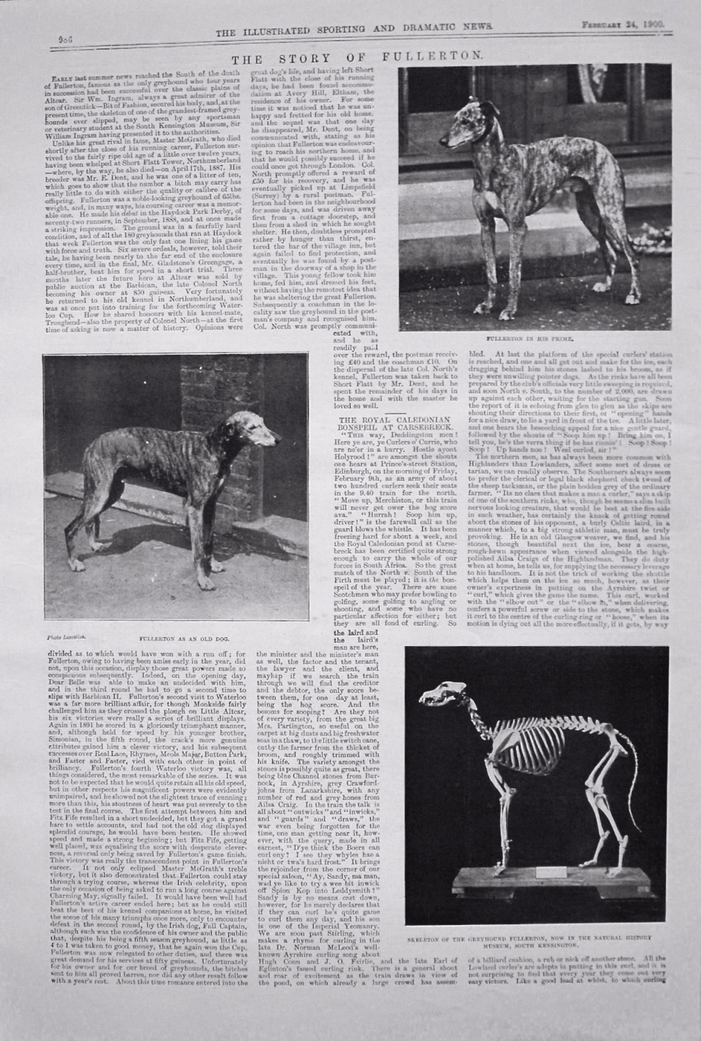 The Story Of Fullerton. (Greyhound) 1900