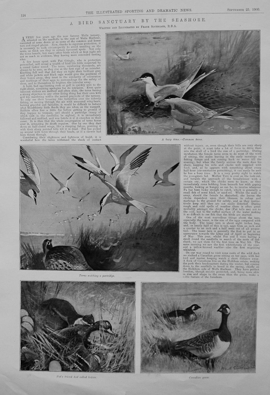 A Bird Sanctuary by the Seashore. 1909