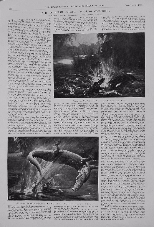 Sport in North Borneo. - Trapping Crocodiles. 1909
