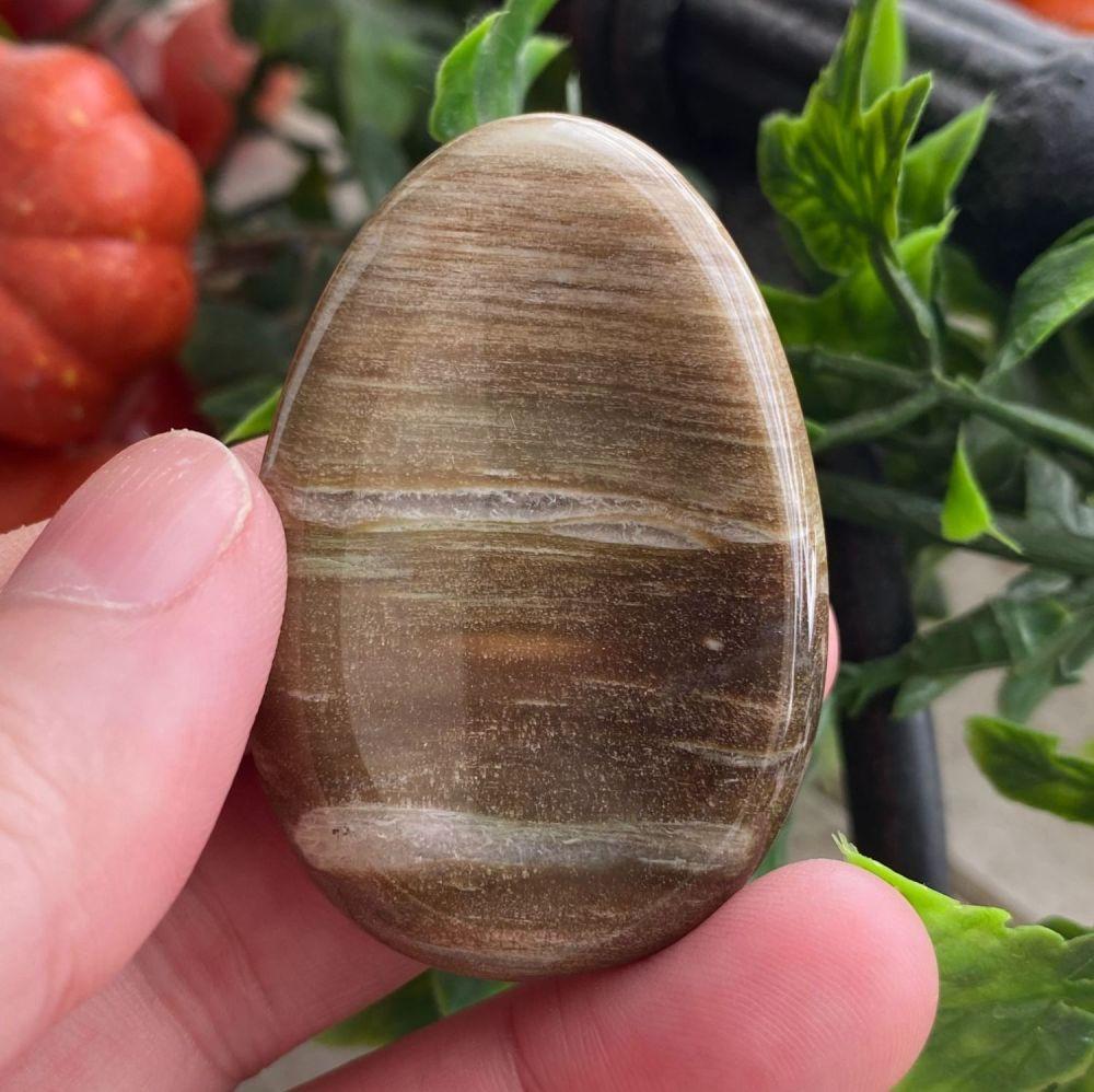Petrified Wood Thumb Stone #4