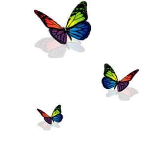 butterflies copy