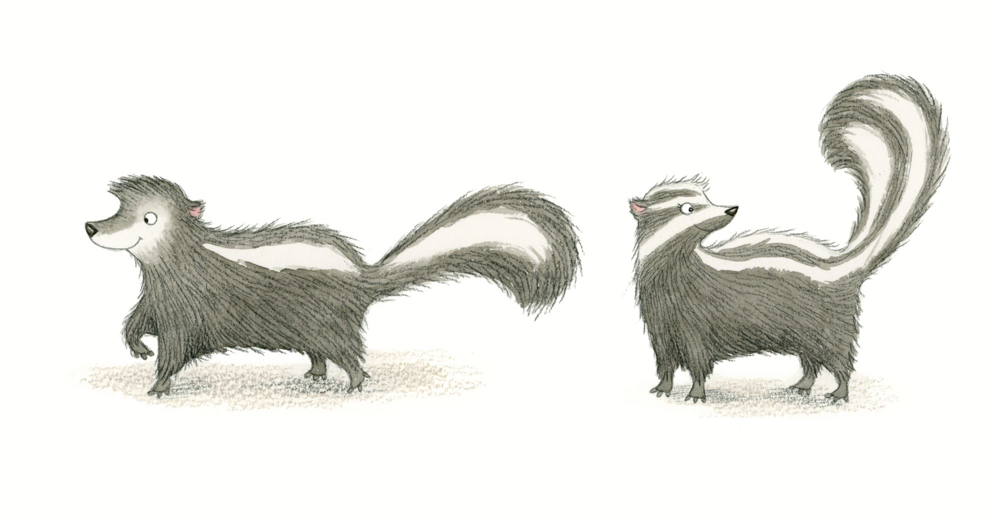skunk illustration