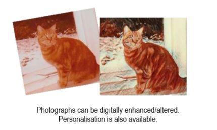 Photo options for Pet Keepsake Box sistersofthemoon.org.uk