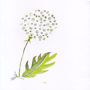 Flowers | Dandelion