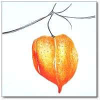 Winter Chinese Lantern