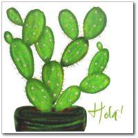Flowers | Cactus, Hola
