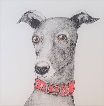 Iggy Italian Greyhound - 455G
