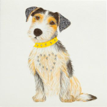 Jack Russell puppy - 336G