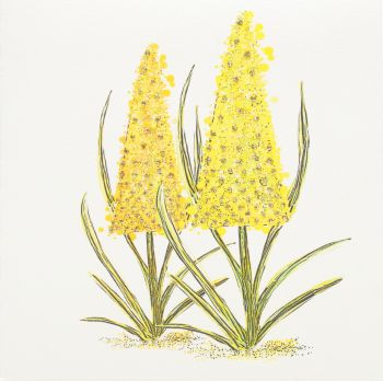 Lupin Yellow - 19YG
