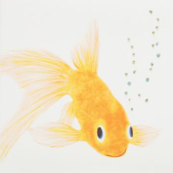 Goldfish - 395G