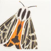 Moth ( orange )