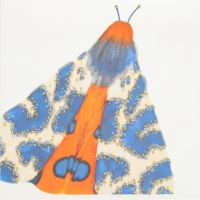 Moth ( Blue )