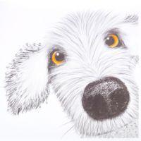 Spike dog - 356AW