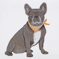 French Bulldog - 359W