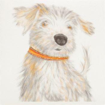 Norfolk Terrier - 431G