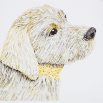 Labrador Golden - 319YG