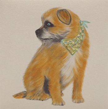 Border Terrier Profile - 334C