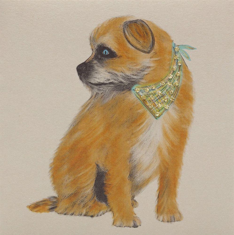 Border Terrier Profile