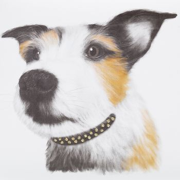 Jack Russell ( Close-up ) - 348W
