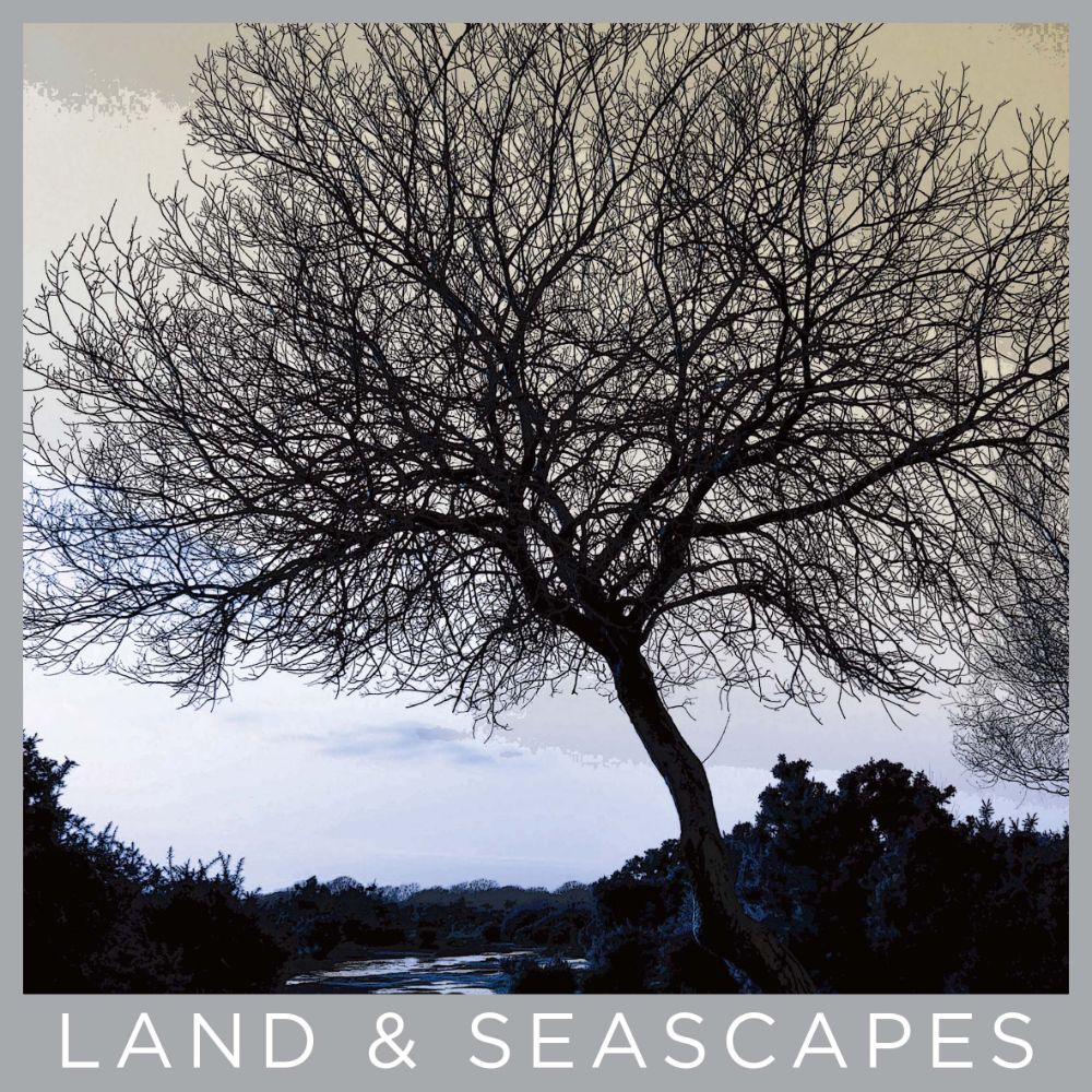 Trees & Seascapes