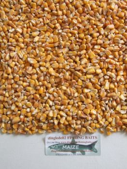 3kg MAIZE SEED ( sweetcorn) CARP SPODDING MIX,SPOD, CARP FISHING