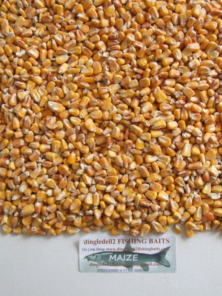 3kg MAIZE SEED ( sweetcorn) CARP SPODDING MIX,SPOD, CARP FISHING