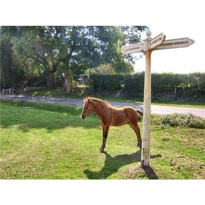 foal by signpost