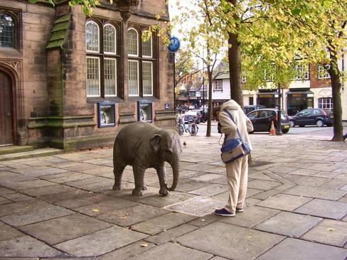 Chester Elephant