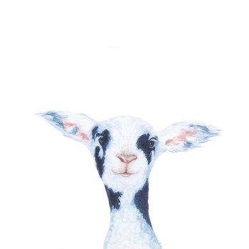Pirate- Lamb CARD