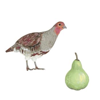 Partridge & Pear CARD