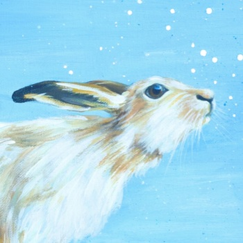 Monty- Mountain Hare