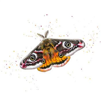 Emperor Moth Mini Print