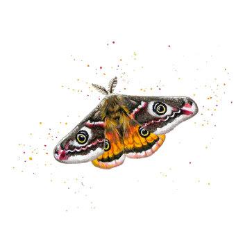 Emperor Moth Card