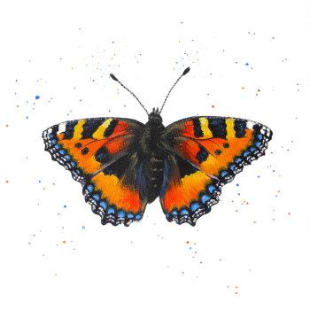 Tortoiseshell Butterfly Mini Print