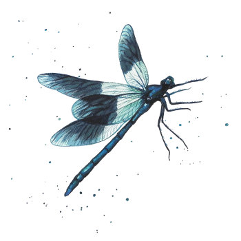 Damselfly Mini Print