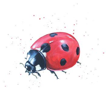 Ladybird Mini Print