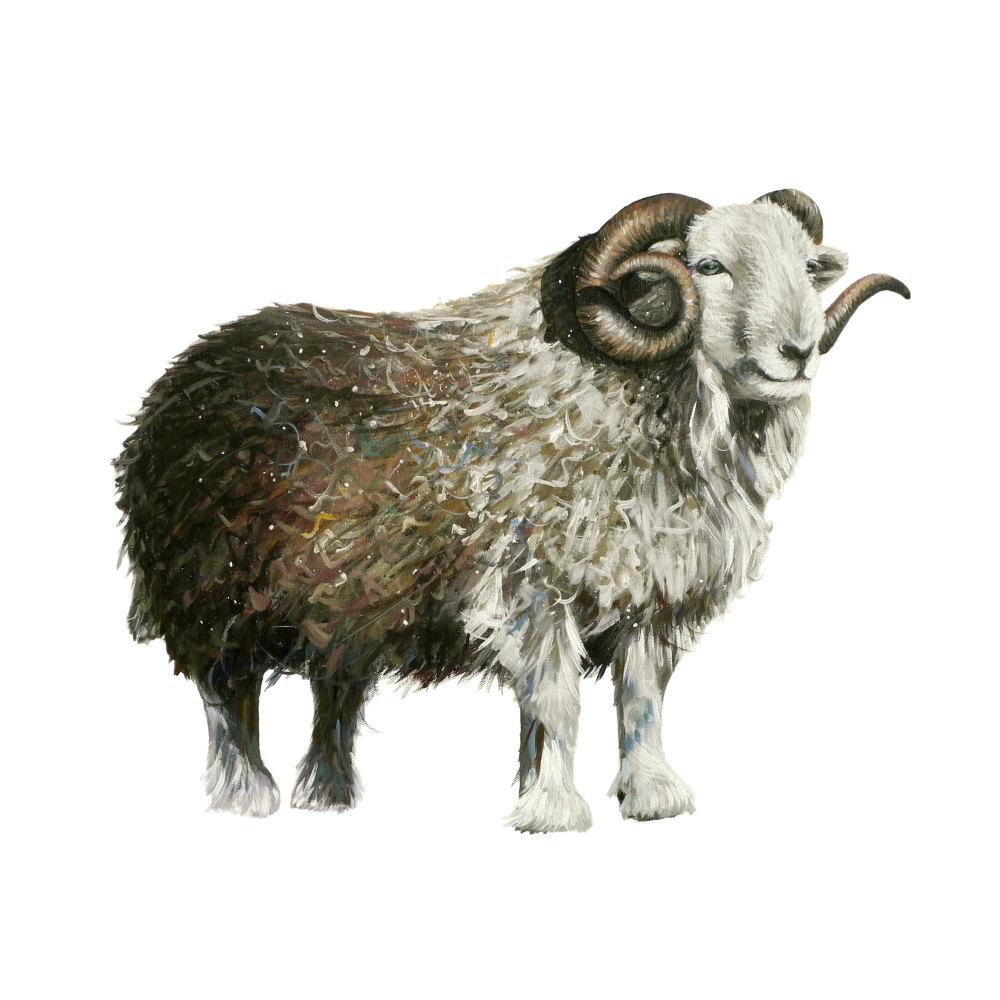 Herdwick Ram Card