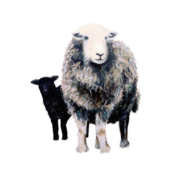 Herdwick Ewe and Lamb PRINT