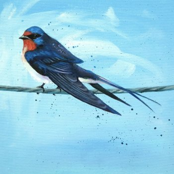 Barn Swallow Card