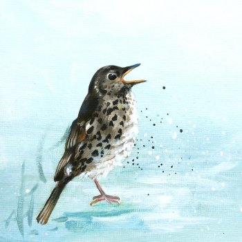 Song Thrush Card