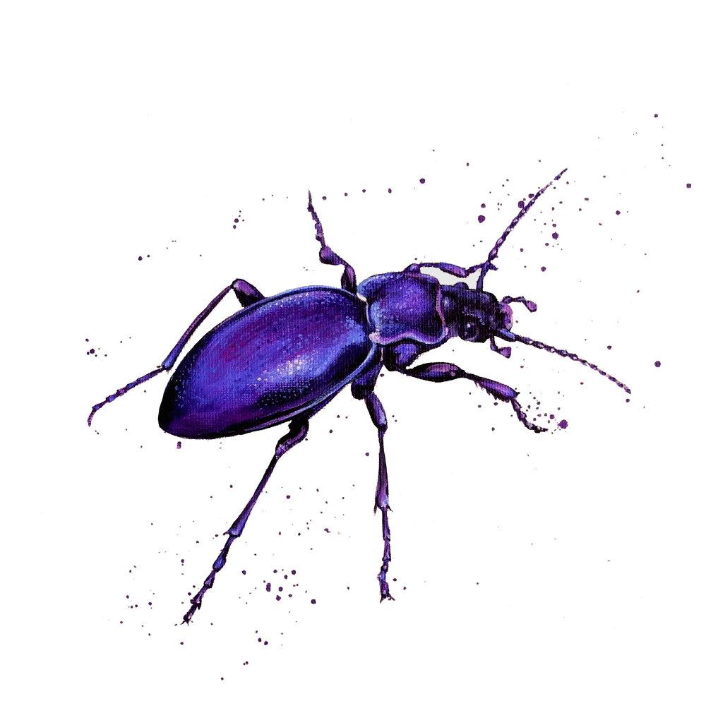 Violet Ground Beetle Print