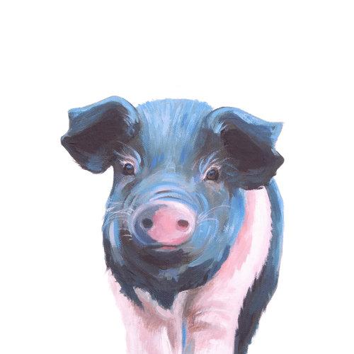 Wilbur- Saddleback pig