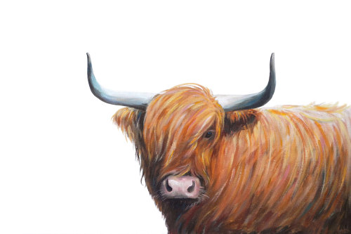Hamish- Highland Cow