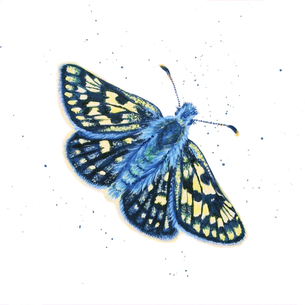 Chequered Skipper Butterfly MINIPRINT