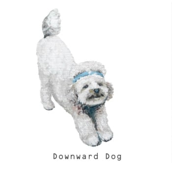 Downward Dog CARD
