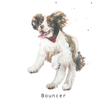 Bouncer CARD