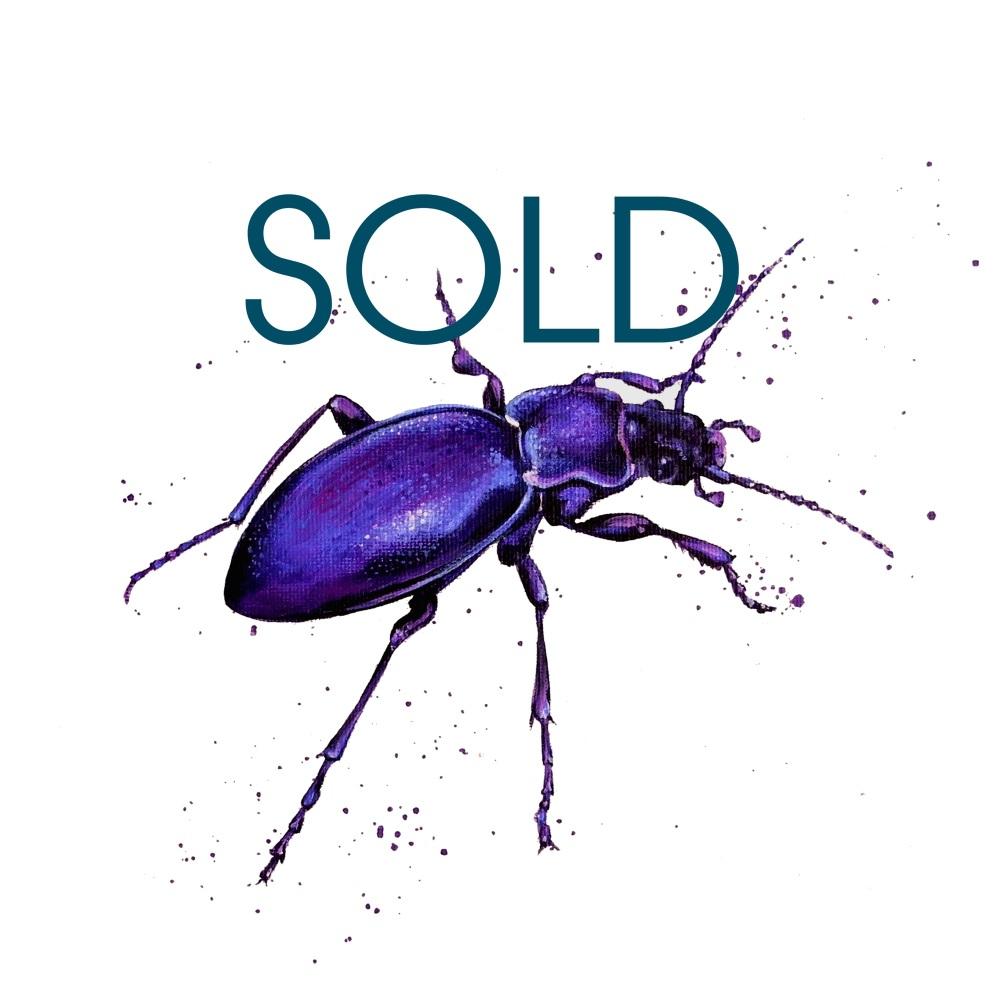 SOLD- Violet Ground Beetle