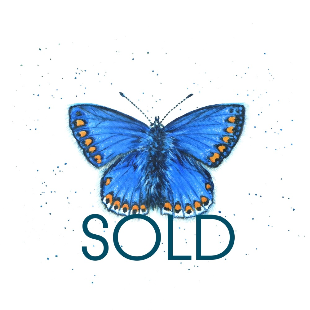 SOLD- Common Blue Butterfly