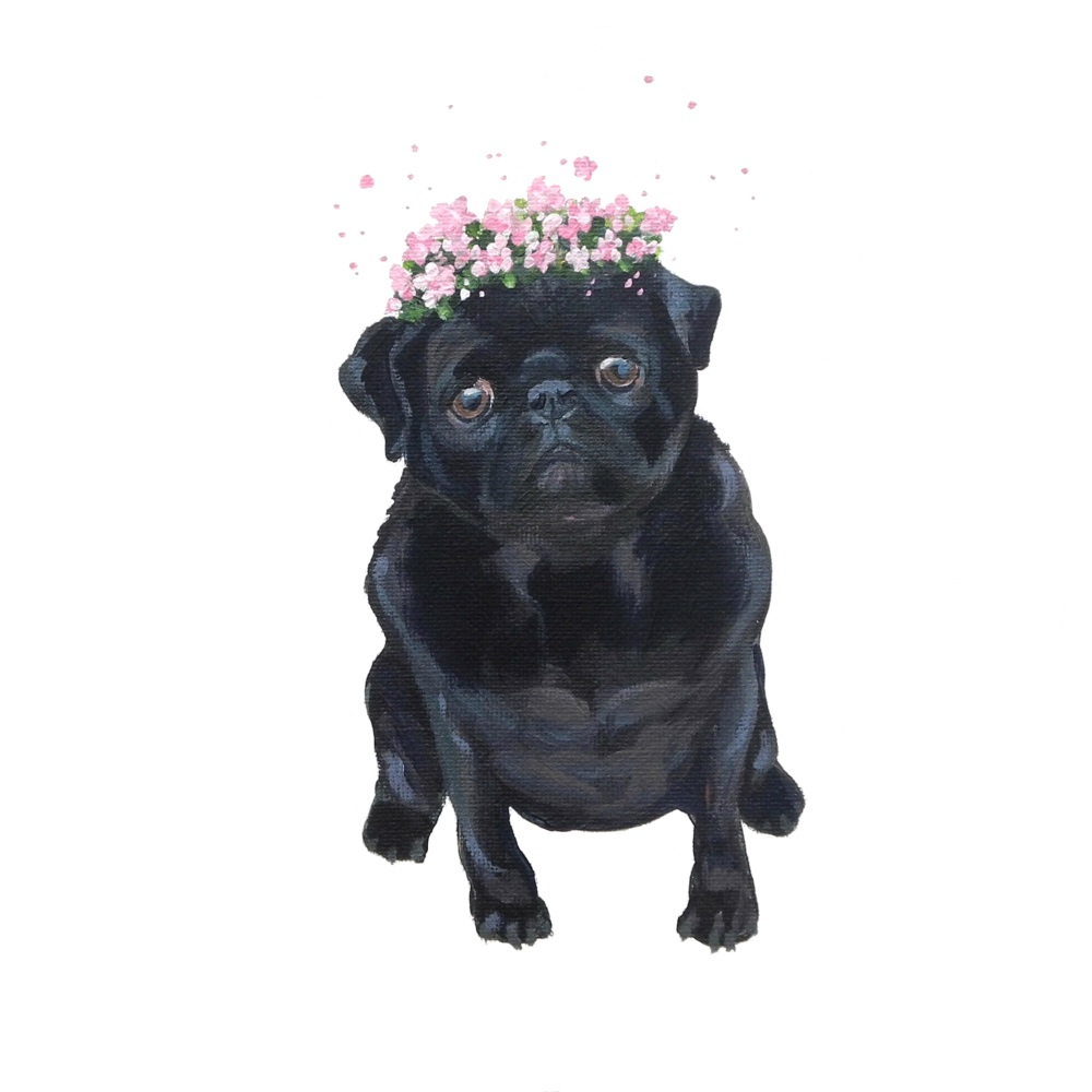 Posy Pug