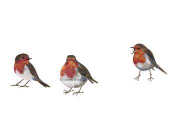 Cheeky Robins PRINT